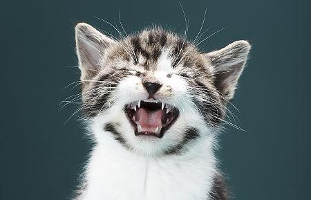 Kitten meowing   Original Filename: cat.jpg