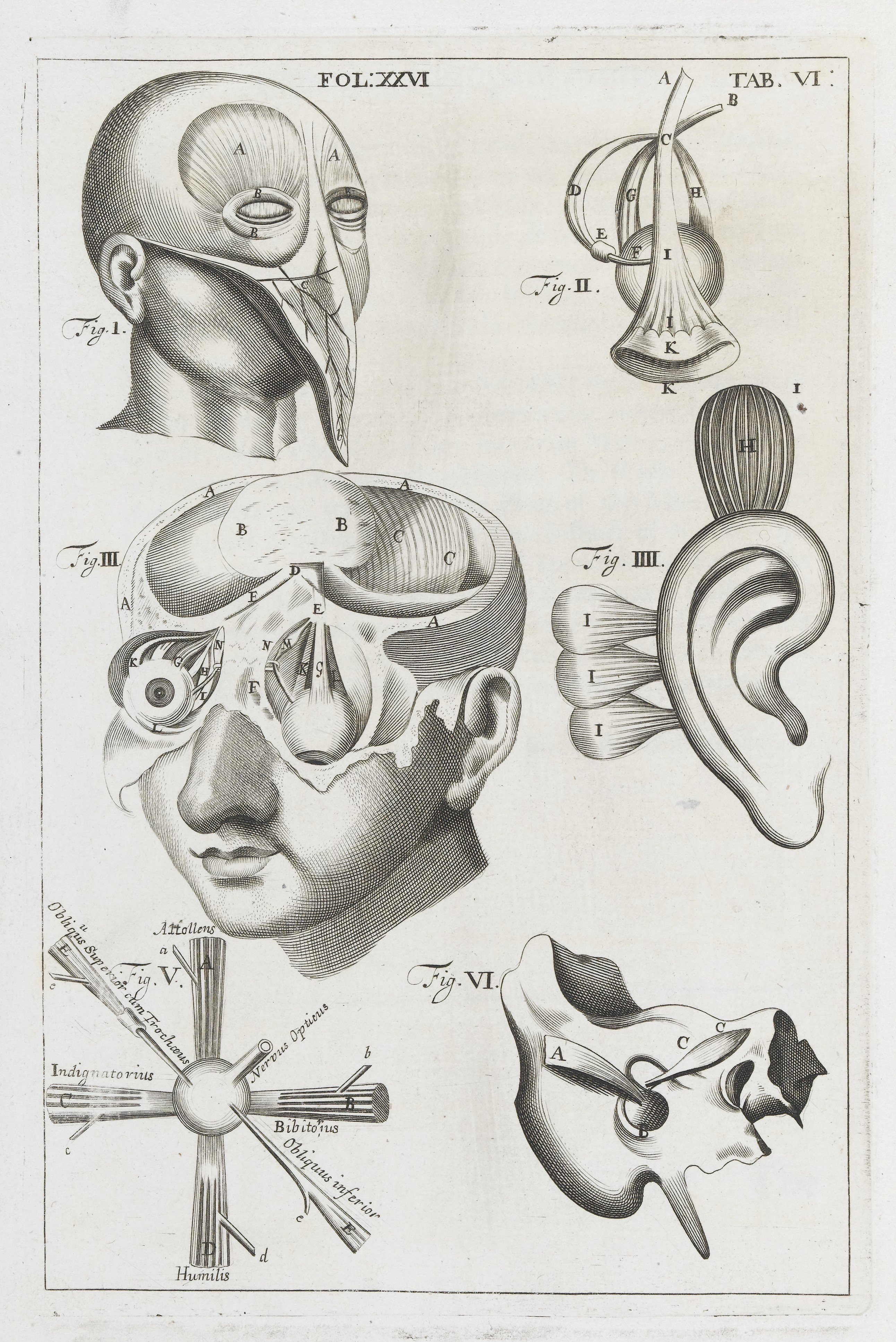 Anatomical illustrations showing muscles of the eyes & ears; photo from Wellcome Images